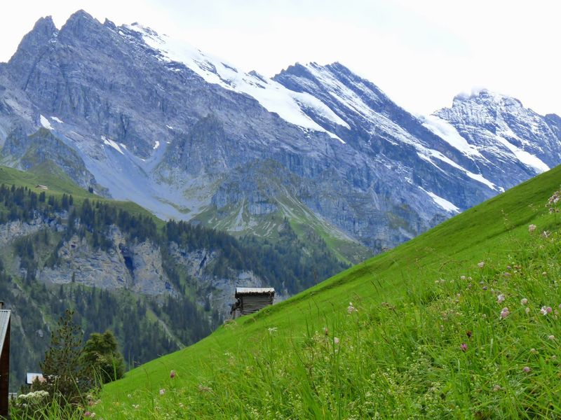 Swiss Alpine Meadow Splendor