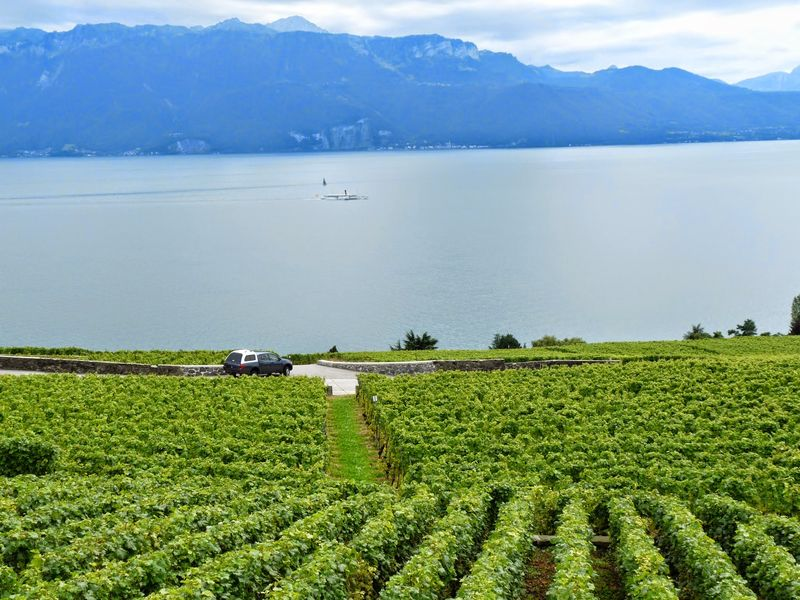 Lausanne vineyard and lake